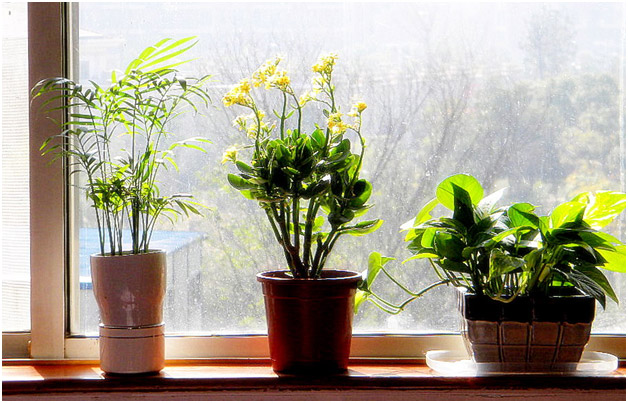 Decorate-your-home-with-plants